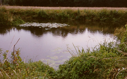 fishing River Beult near Hunton